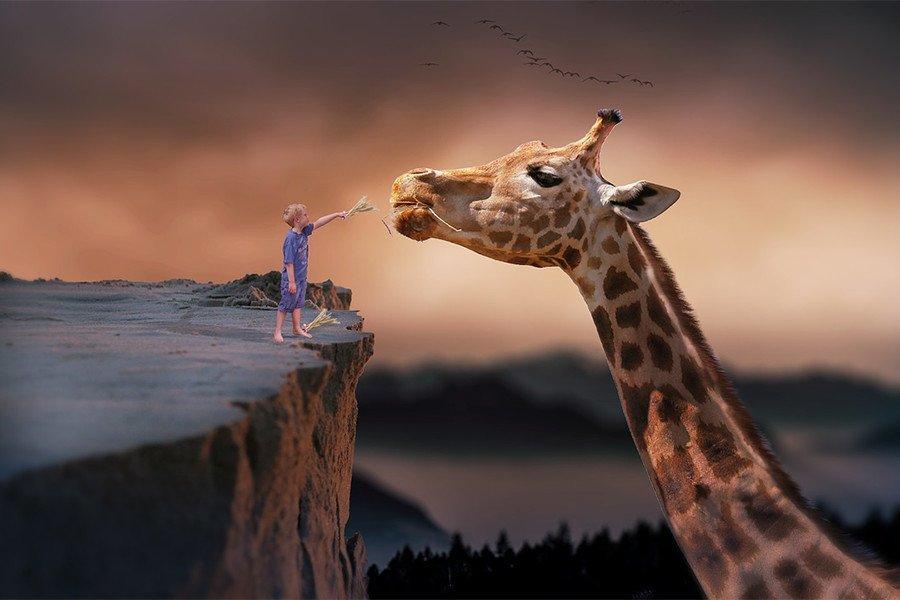 giraffa - coinvolgere un influencer
